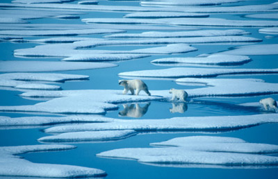 Polar-bear-global-warming-1